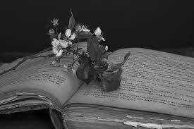 цветок на книге