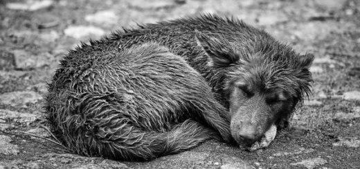бездомная собака Кусака