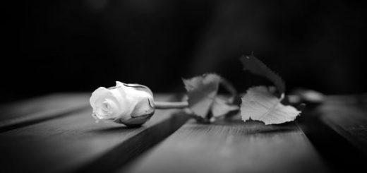 роза на скамейке
