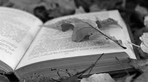 книги с листьями