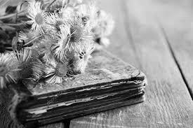 книга и цветы, красивая картинка