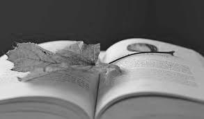 книга и лист, гербарий