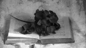 герань и книга