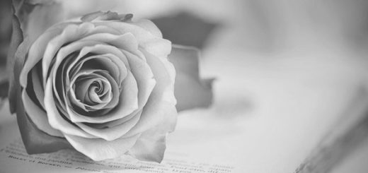 роза на тетради