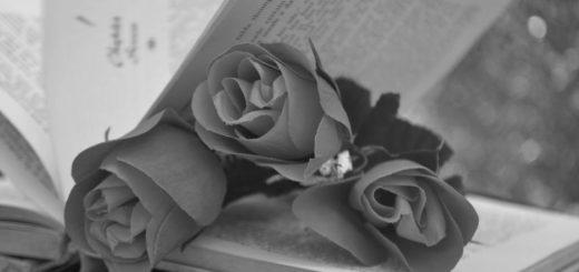 розы на книге