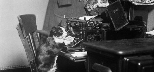 кот печатает на машинке