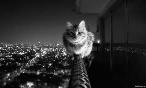 смелый кот сидит на высоком месте