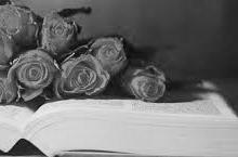 книги и розы