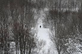 зима, одиночество, лес