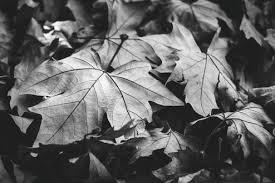 осень, время года