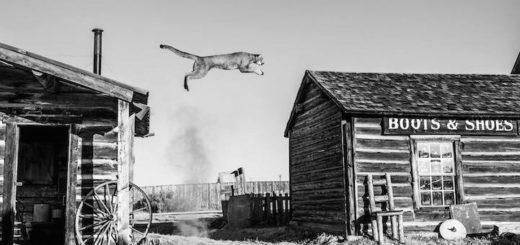 сила, мощь, прыжок