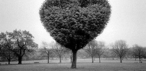 любовь, сердце, чувство