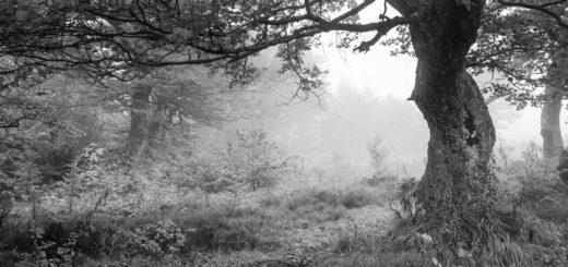 дерево на поляне