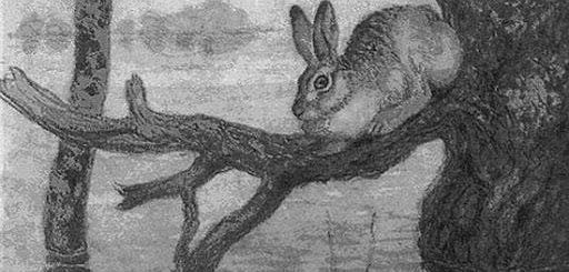 заяц на дереве