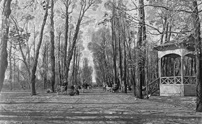 Летний сад черно белой осенью