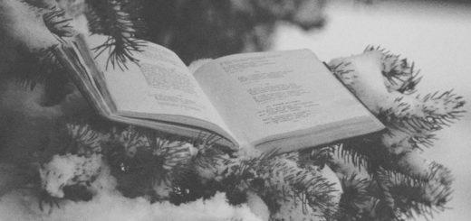 книга зимой